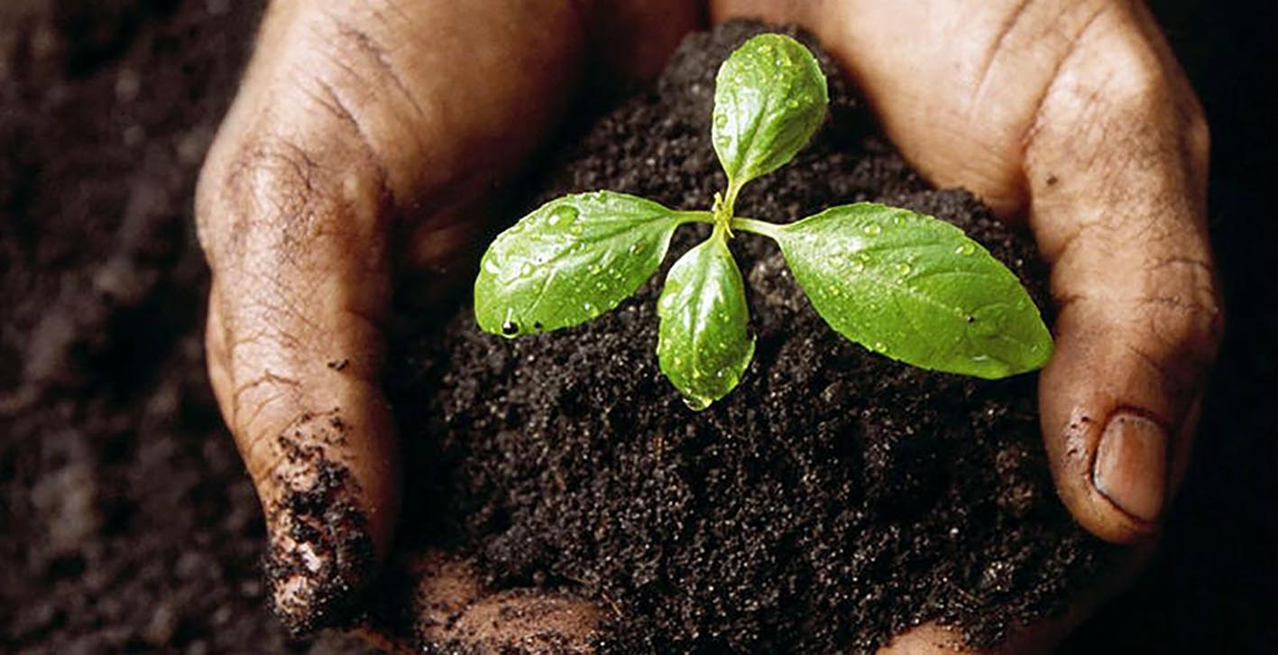 compostagem planta ecossistema