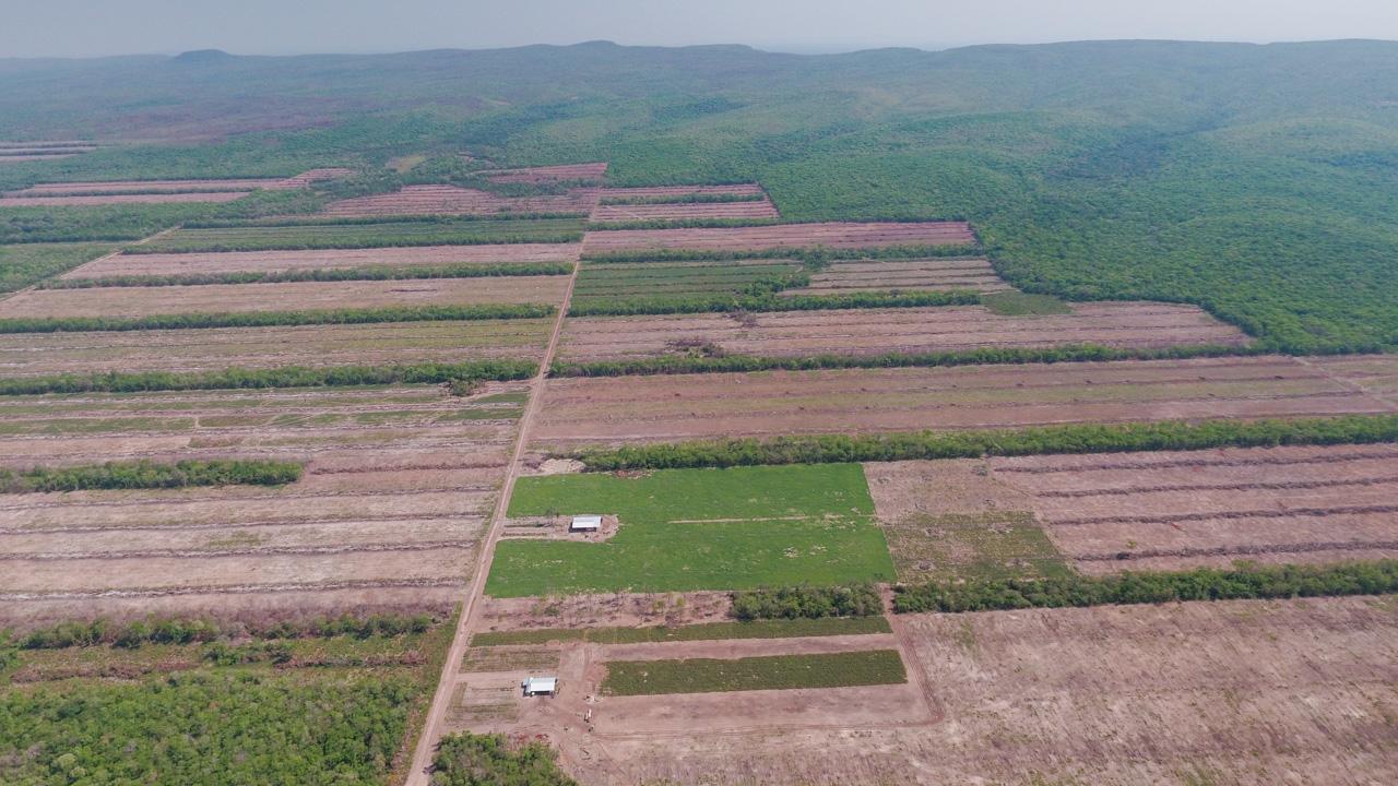Floresta soja