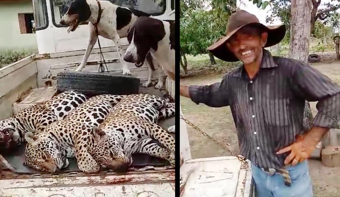homem mata tres oncas em mato grosso e video firaliza na internet