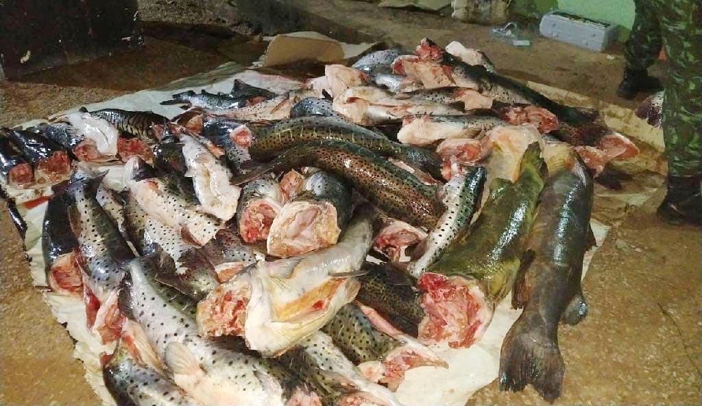 Pesca predatoria peixe apreendido