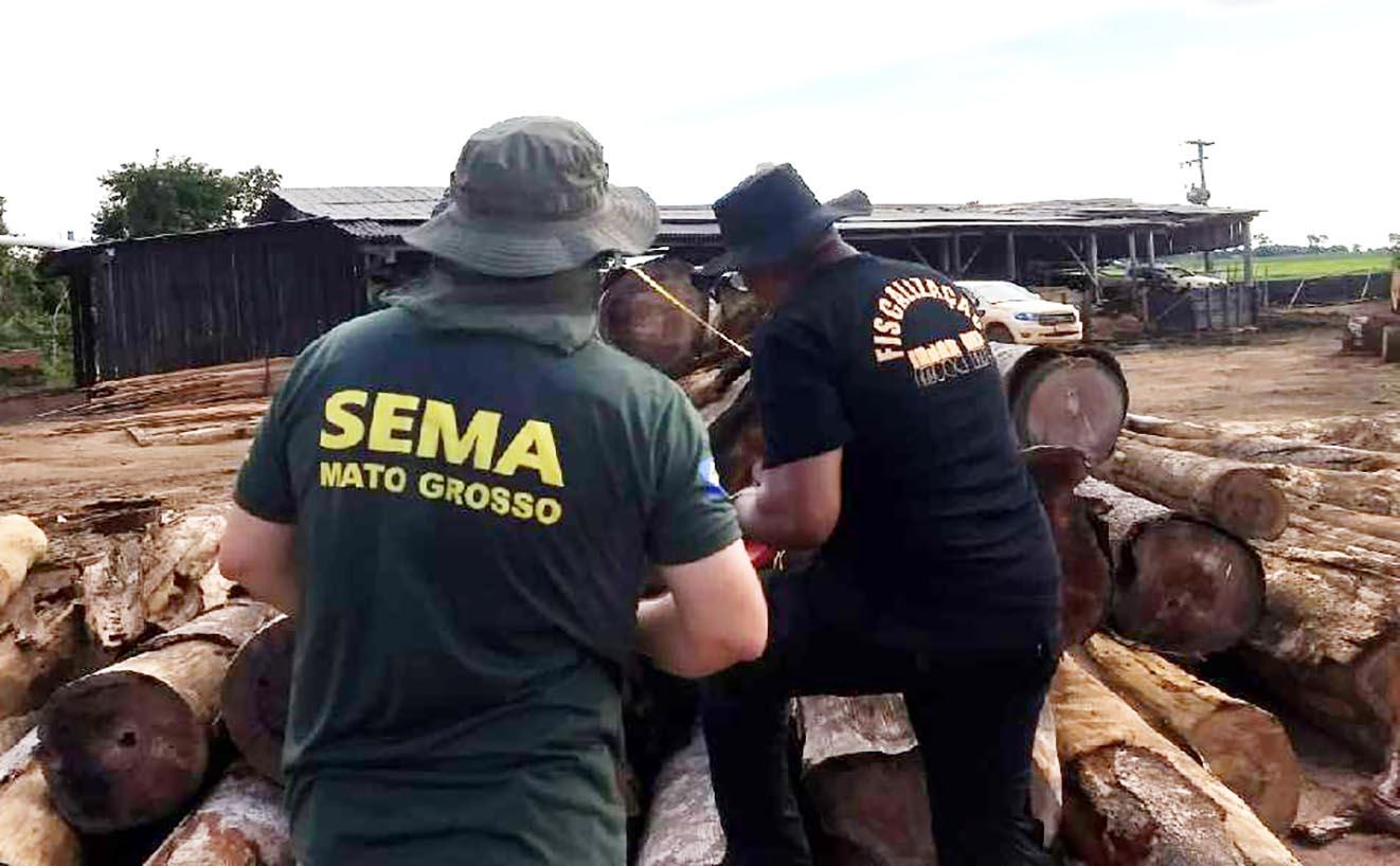operacao apreende madeira madereira sema