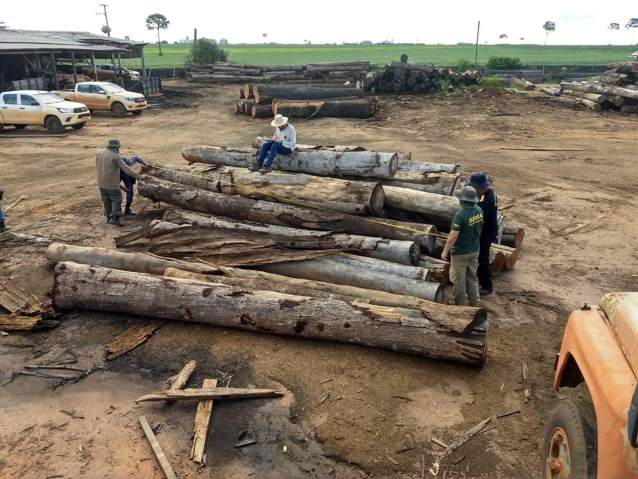 Agentes avaliam que esta é a maior apreensão de madeira protegida por lei já realizada em Mato Grosso