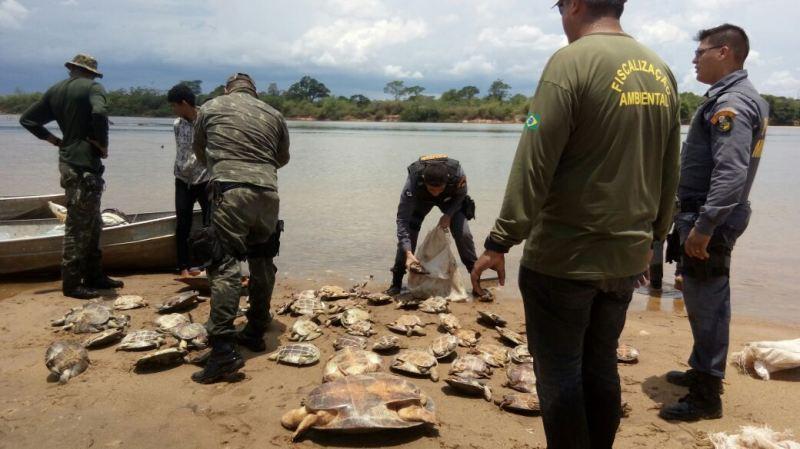 Operação apreende 60 tartarugas provenientes de pesca depredatória